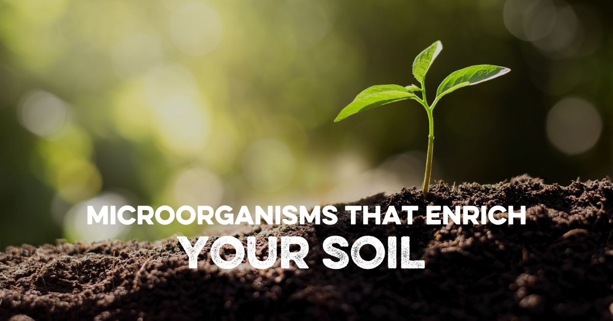 Microorganisms That Enrich Your Soil