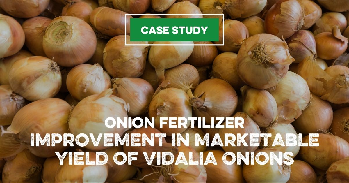 Onion Fertilizer: Improvement in Marketable Yield of Vidalia Onions