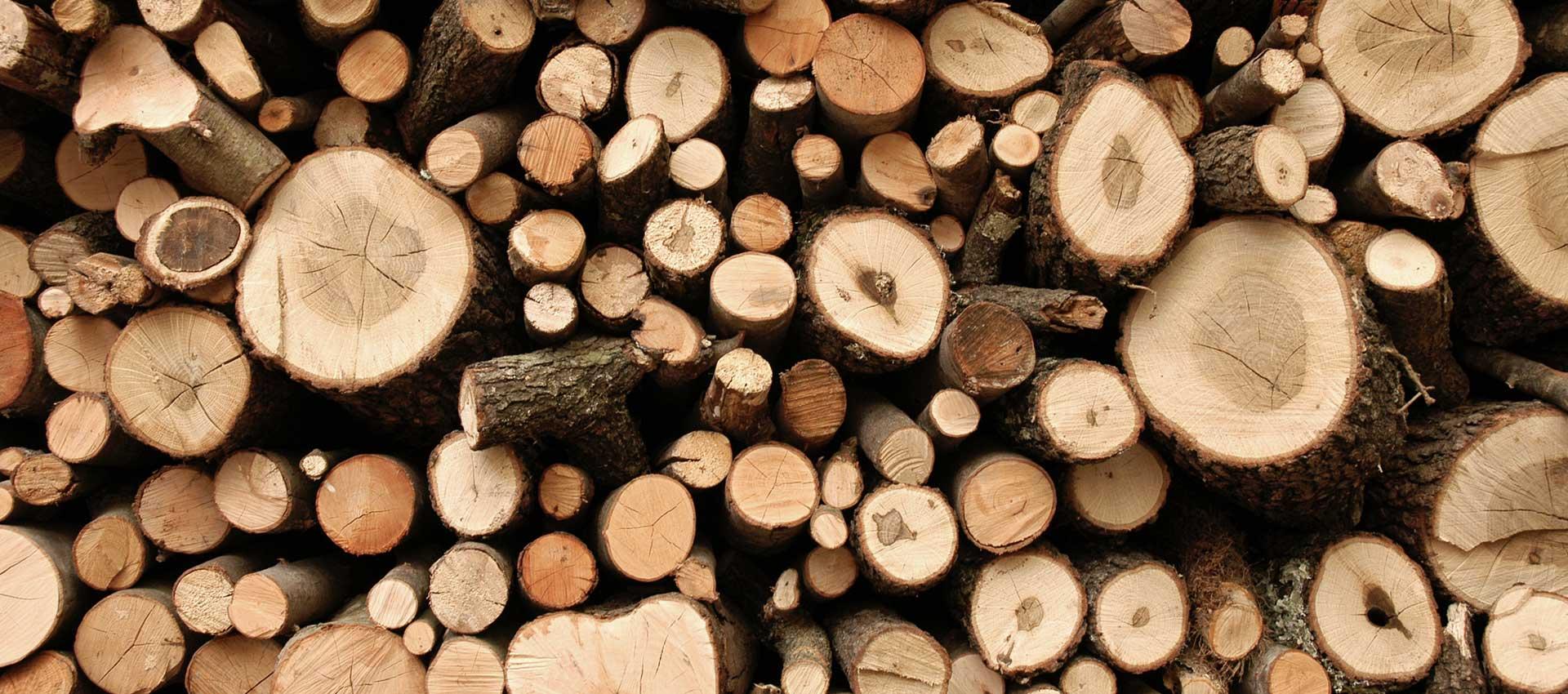 Der heissbegehrte Rohstoff: Holz