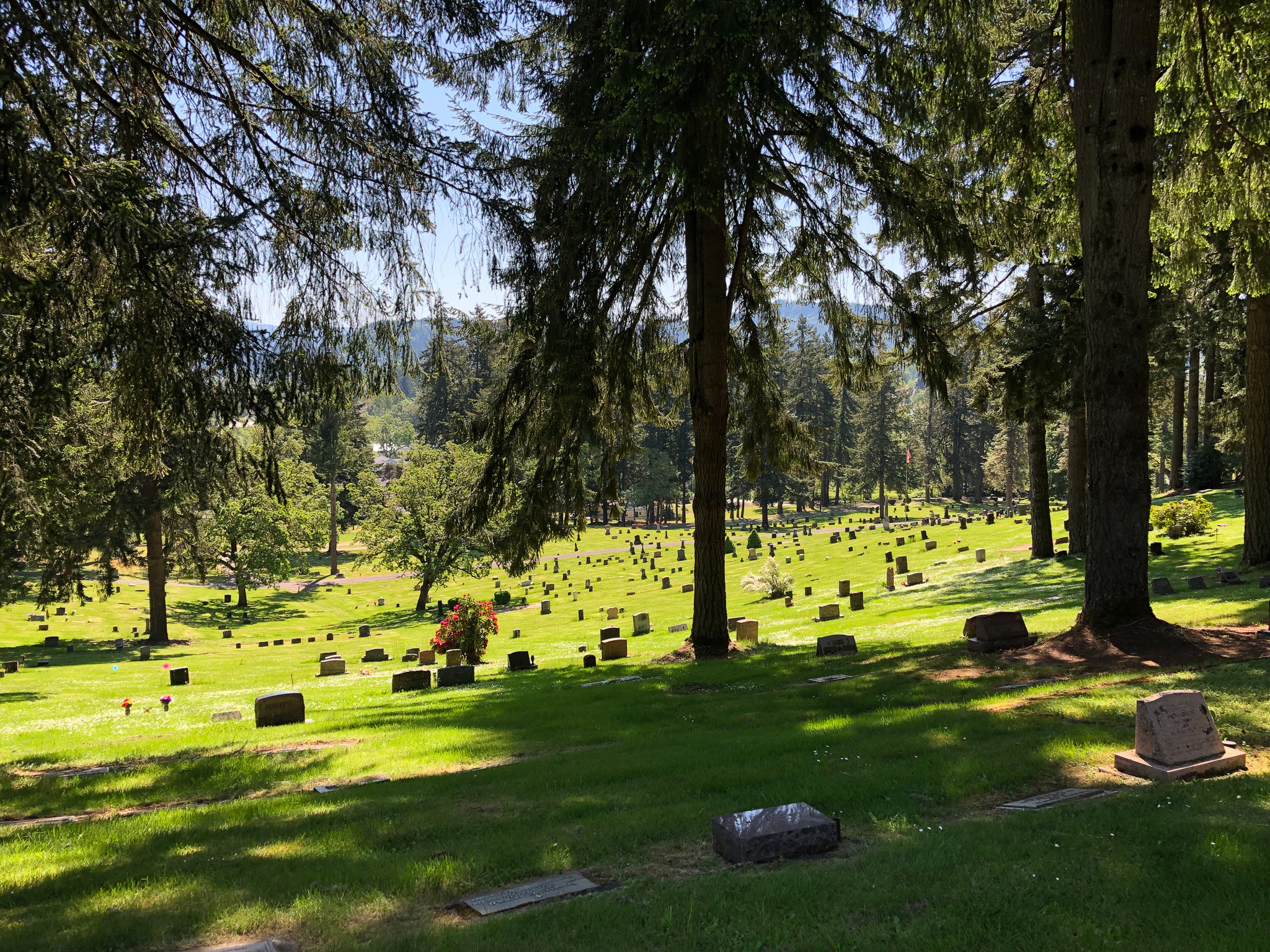 trees fir grove cemetery
