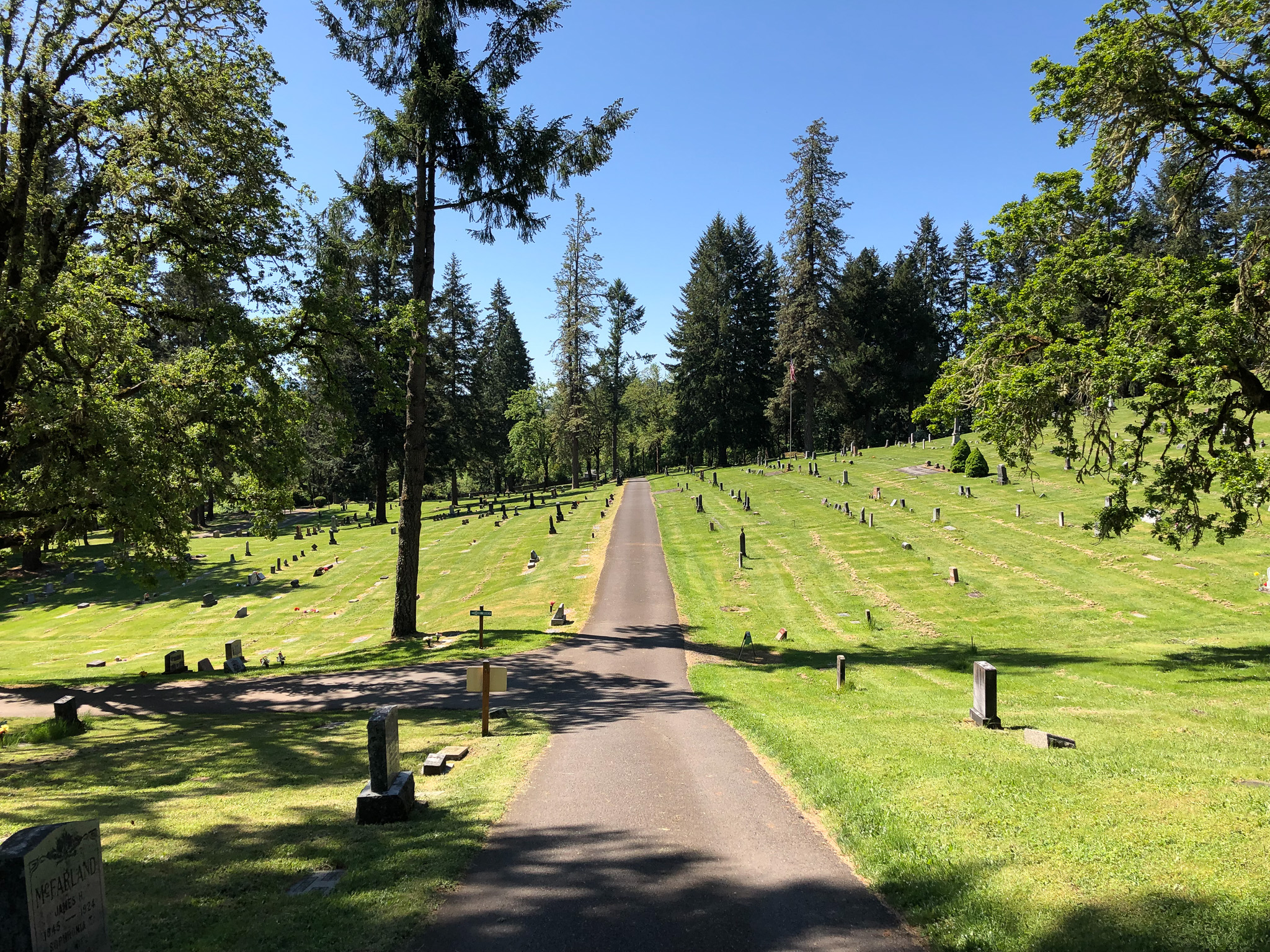 a paved path through fir grove cemetery