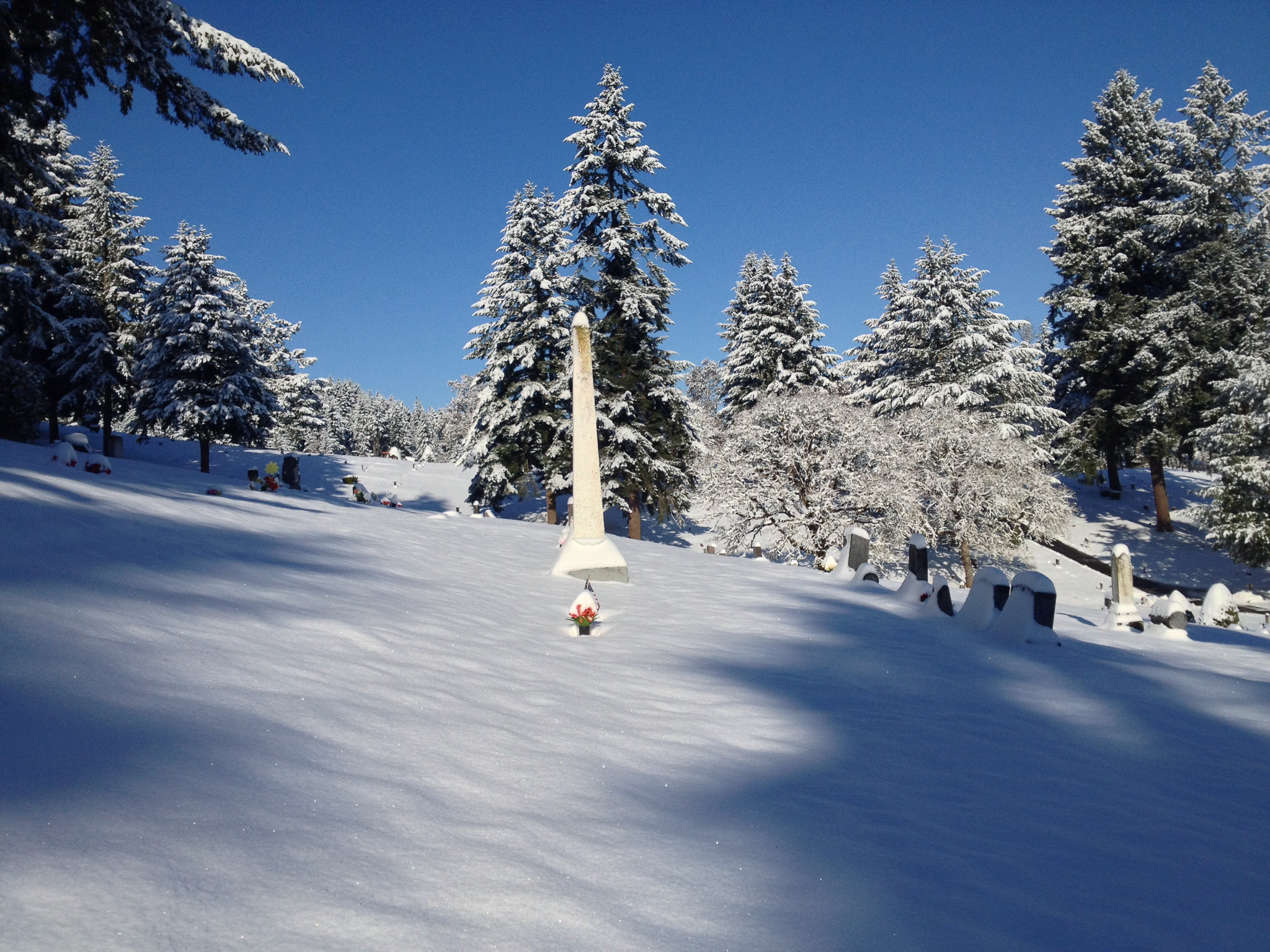 fir grove cemetery in the winter