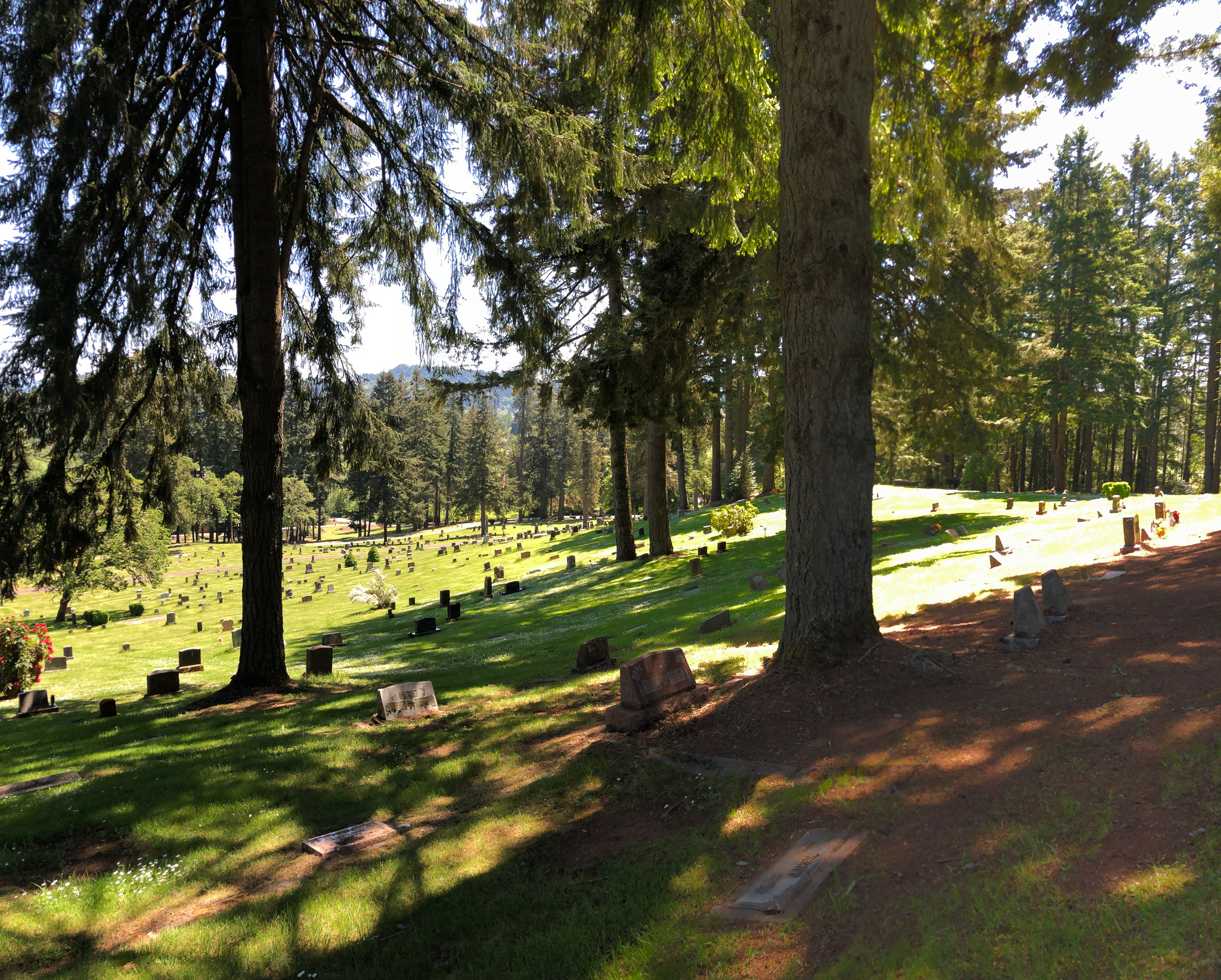 trees at fir grove cemetery