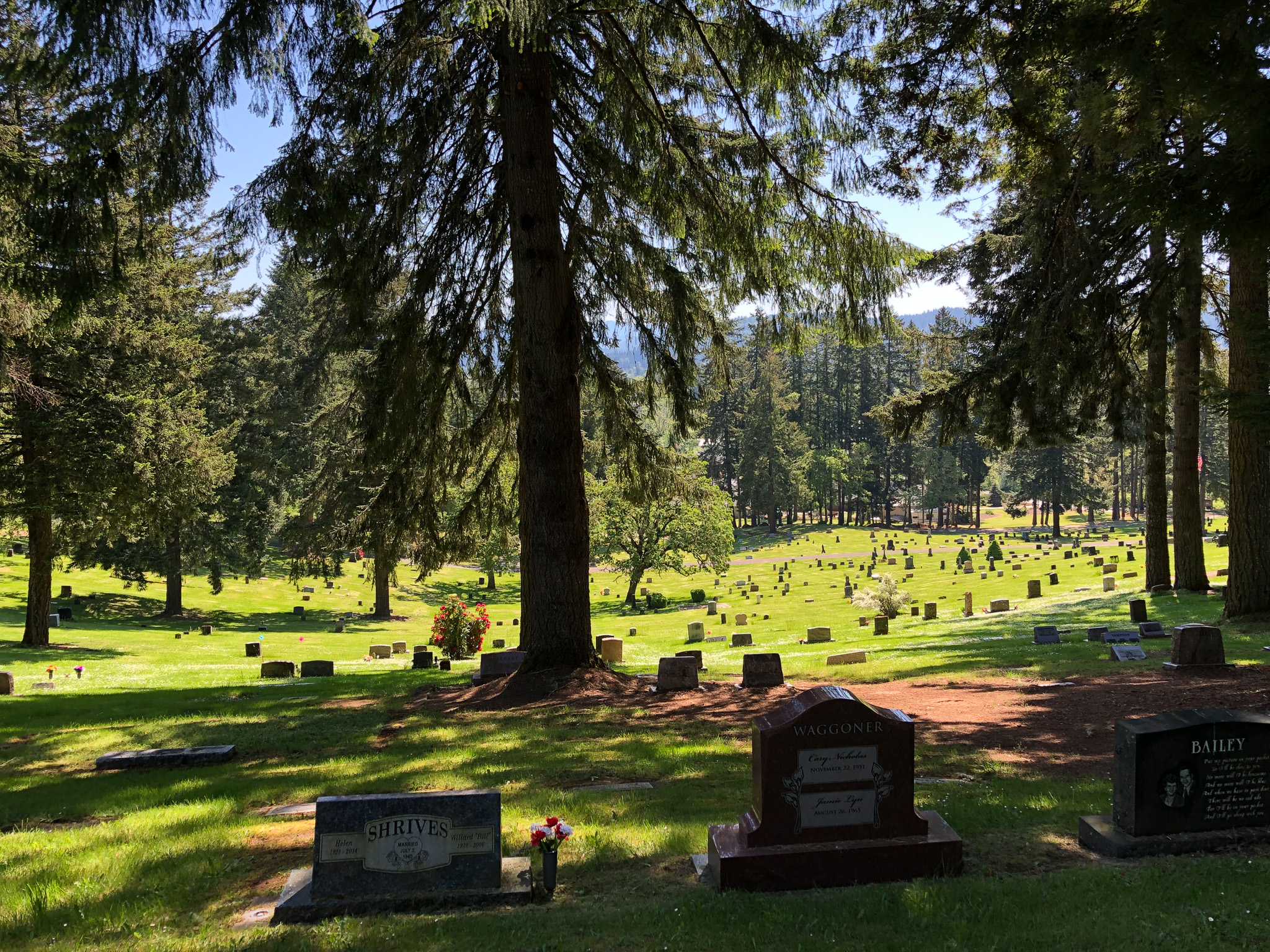trees and graves at fir grove cemetery