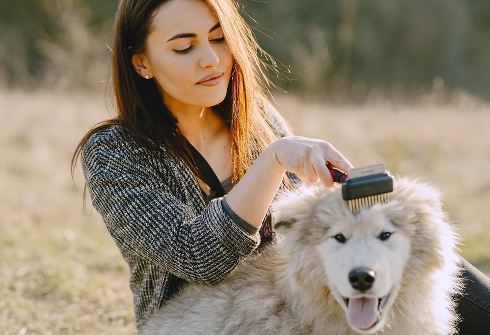 woman brushing shaggy dog