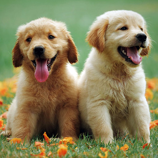 littermate syndrome two puppies