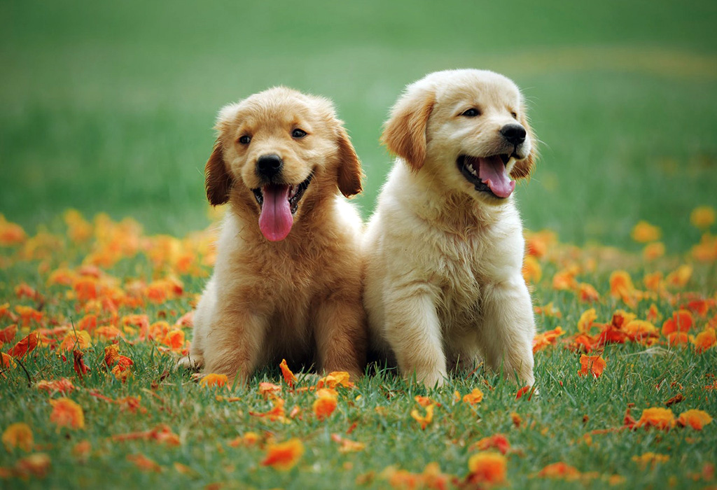 two puppies playing in leaves