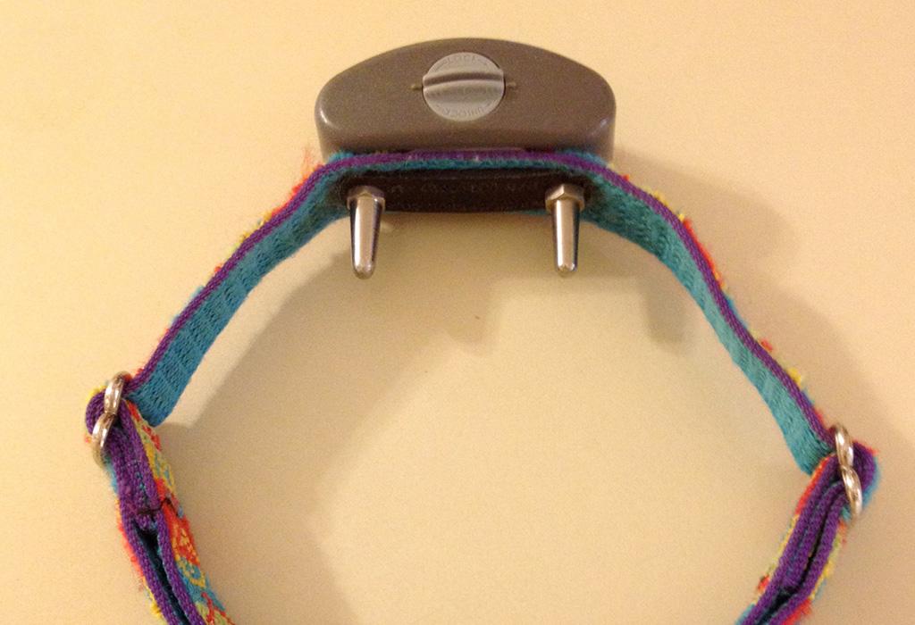 electric collar