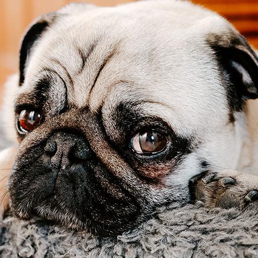 dog adoption milestones