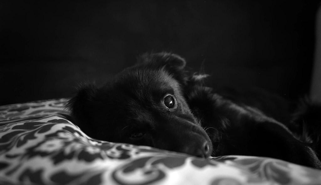 night 1 milestone dog sleeping