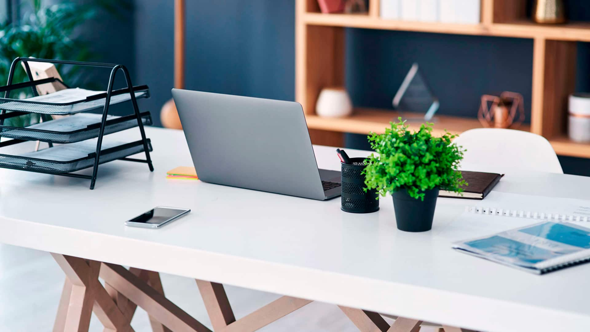 Office Plants: The Health Benefits
