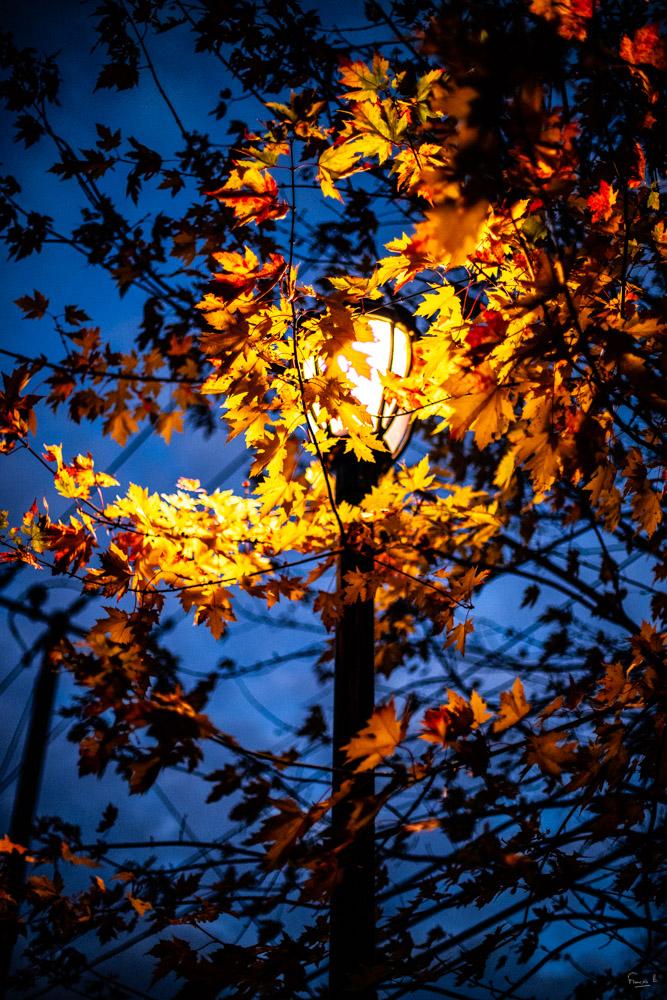 Eclairage d'automne