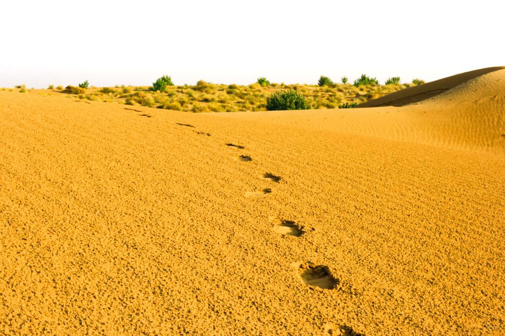 Jaisalmer - India - François B. for Photo-to-go
