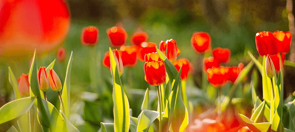 True Spring Colours
