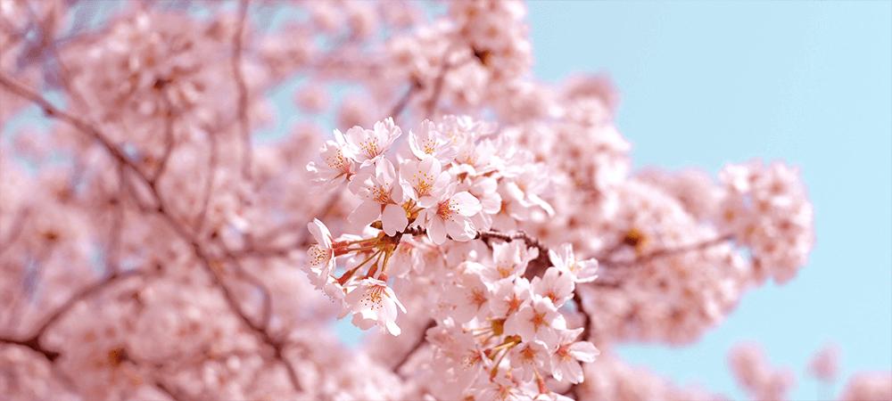 Light Spring Colours