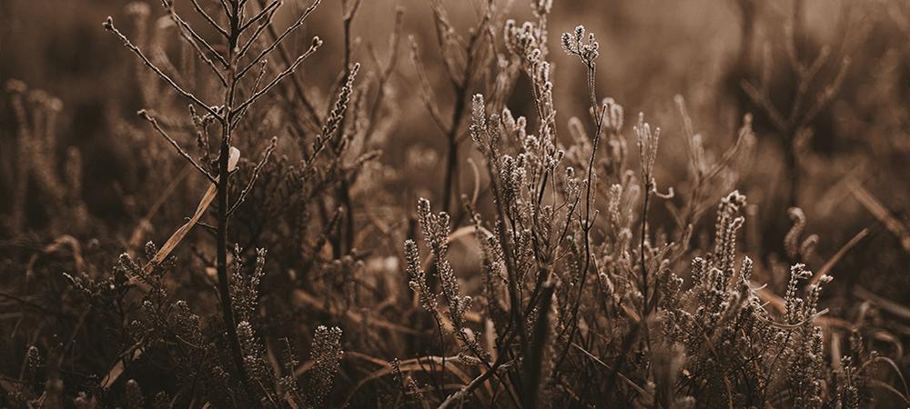 Soft Autumn Colours