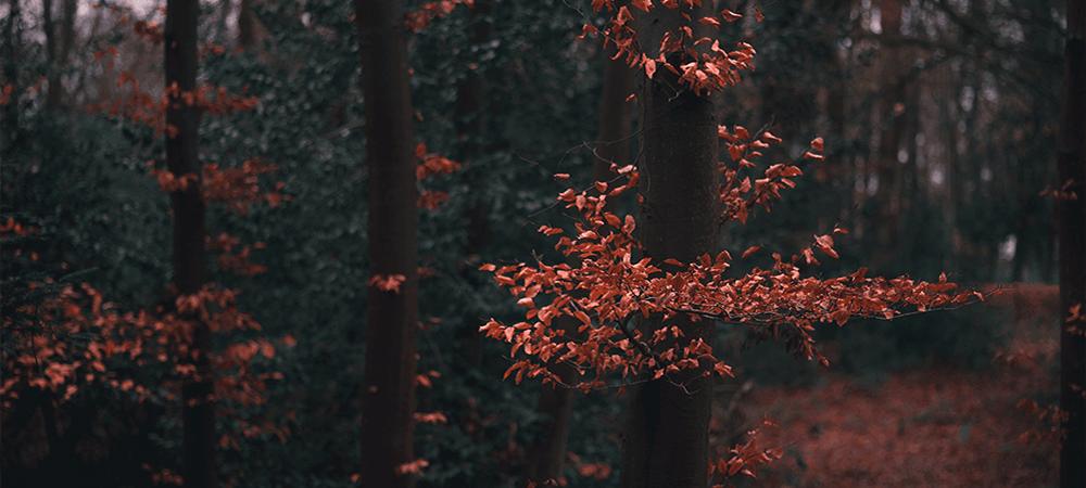 Dark Autumn Colours