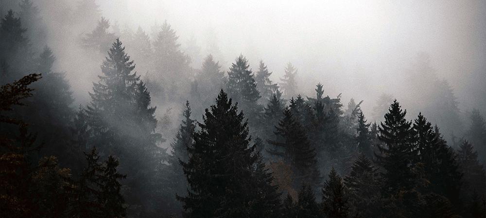 Dark Winter Colours