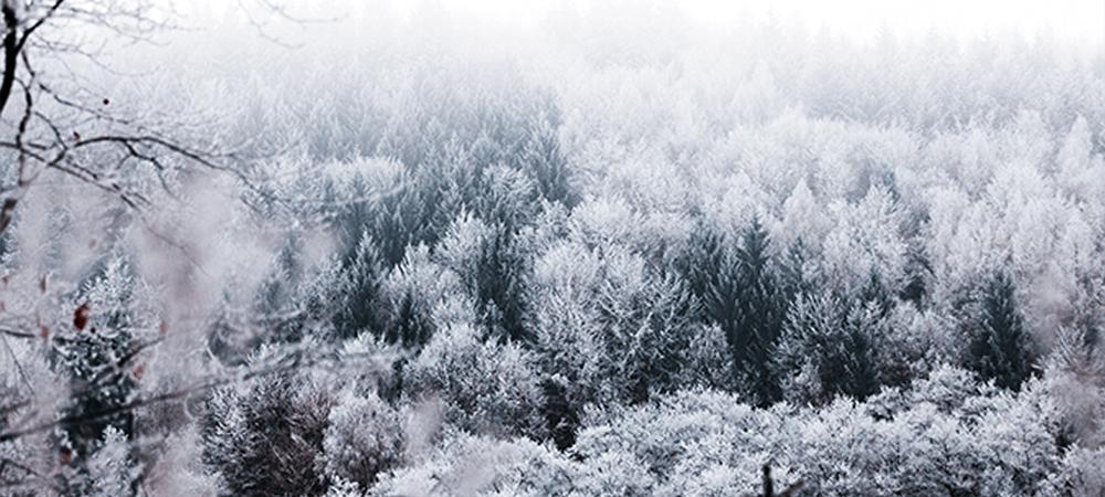 True Winter Colours
