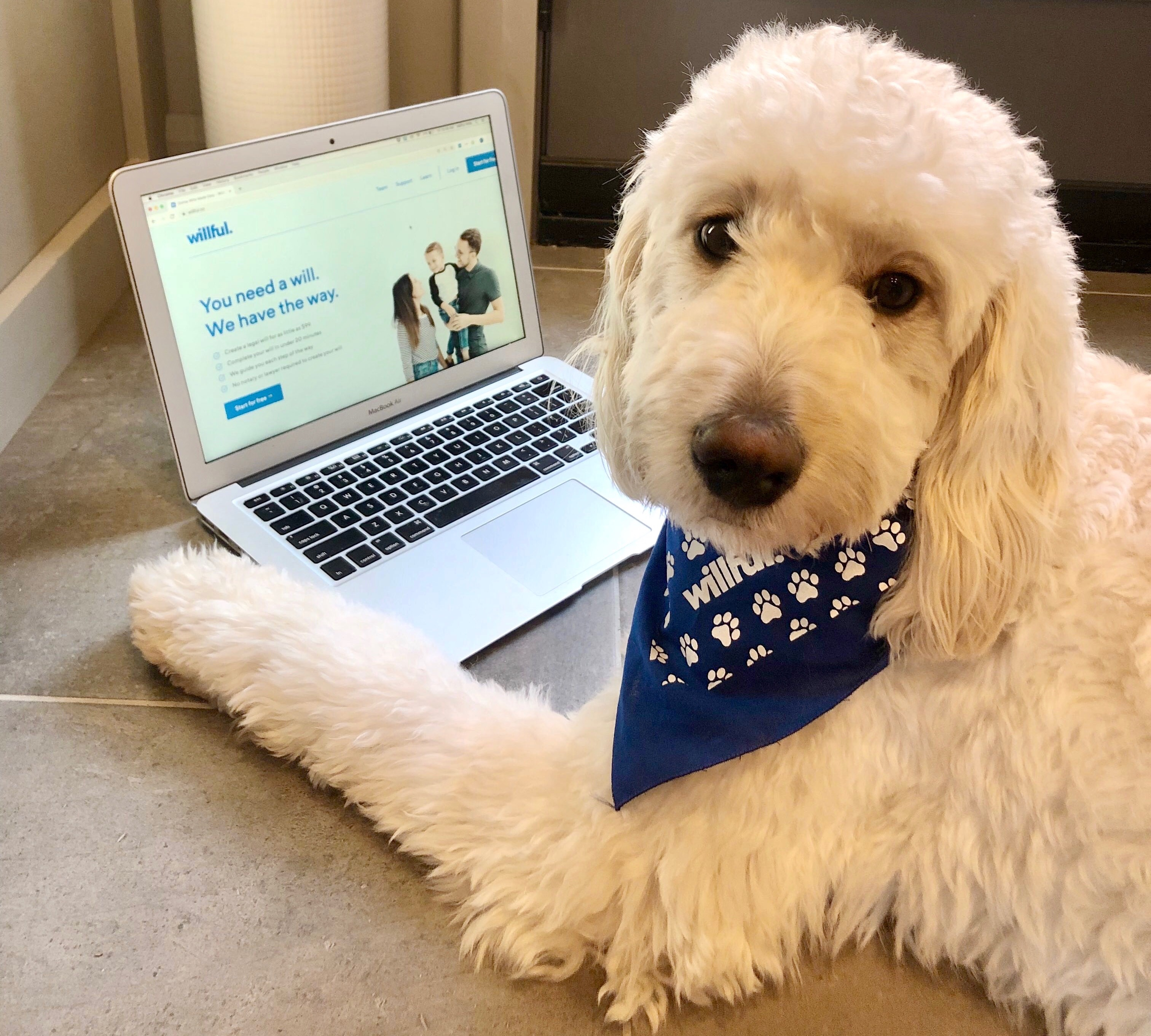 A dog posing with a laptop with Willful website on the screen