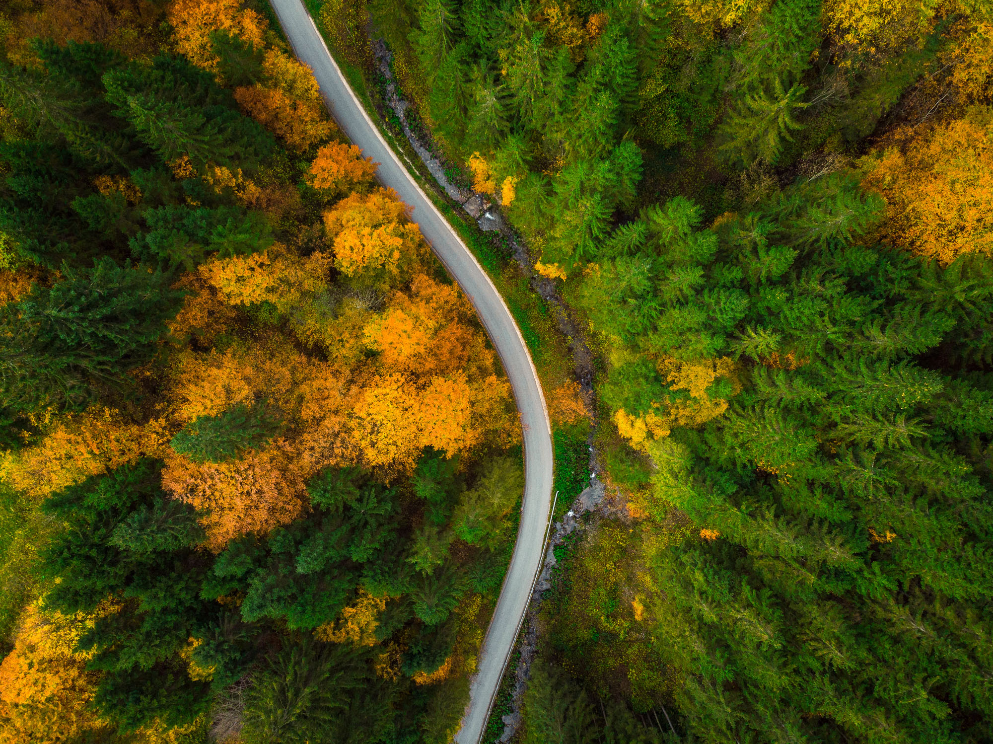 road through woods representing lunavi helping find your path for business technology