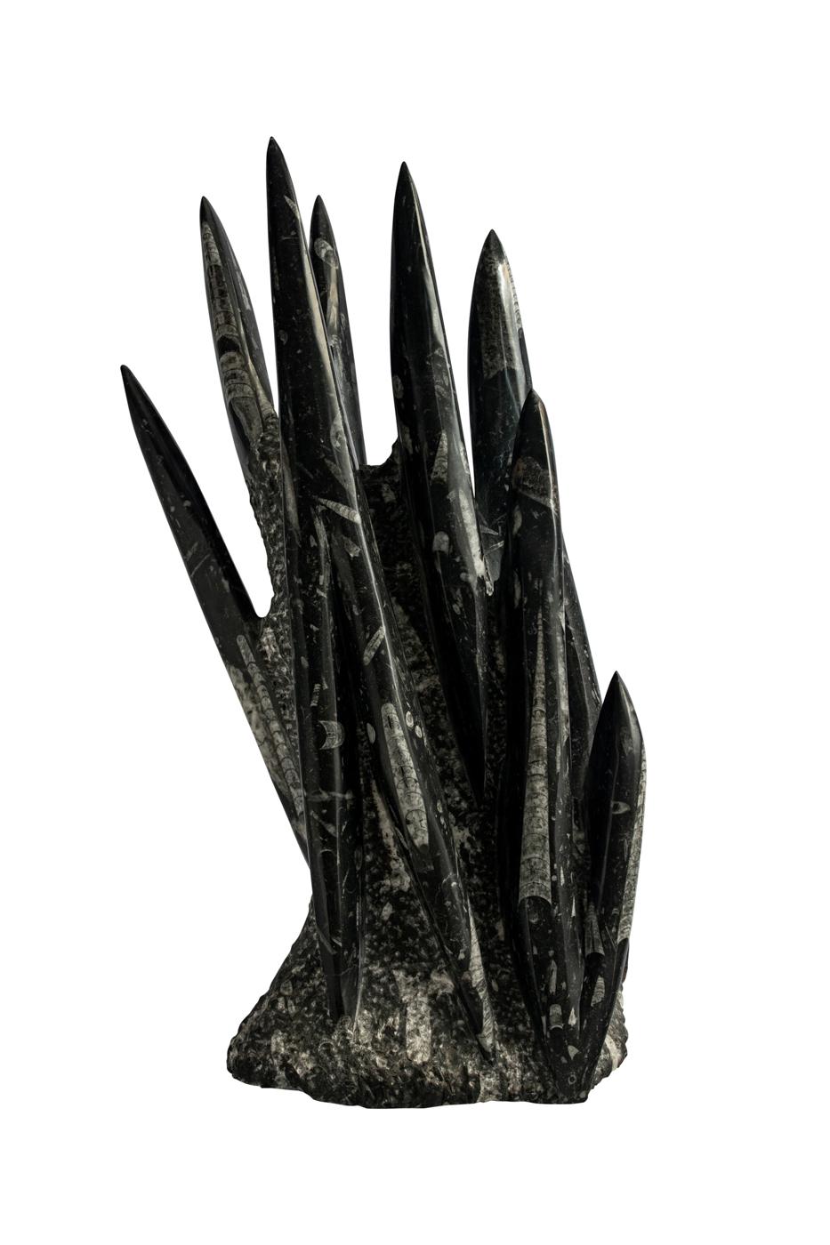 Fósil Orthoceras