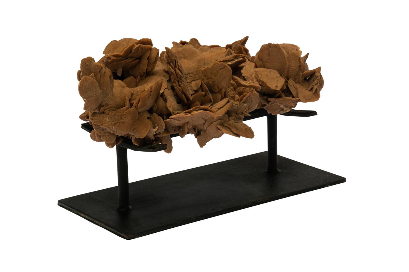 Rosa del desierto natural con base de metal