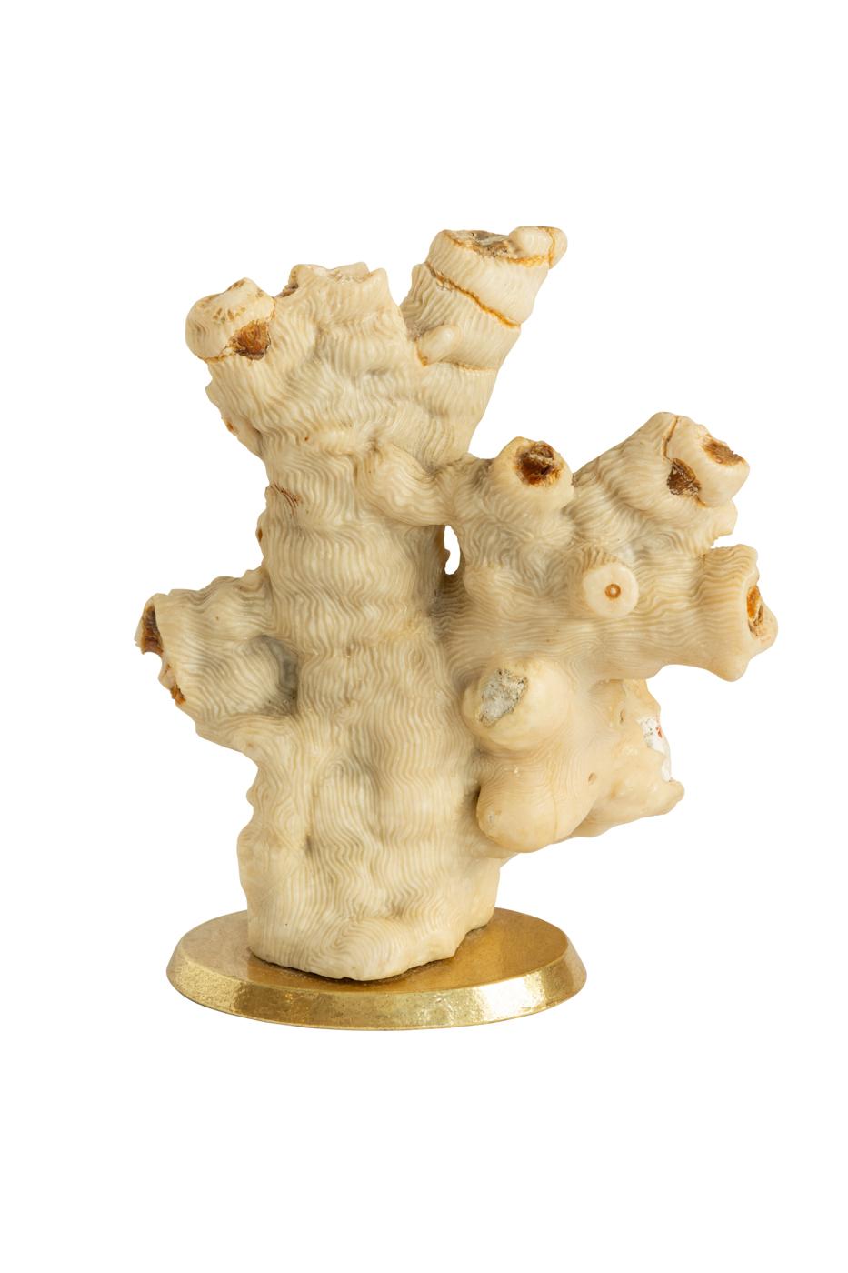 Corales decorativos