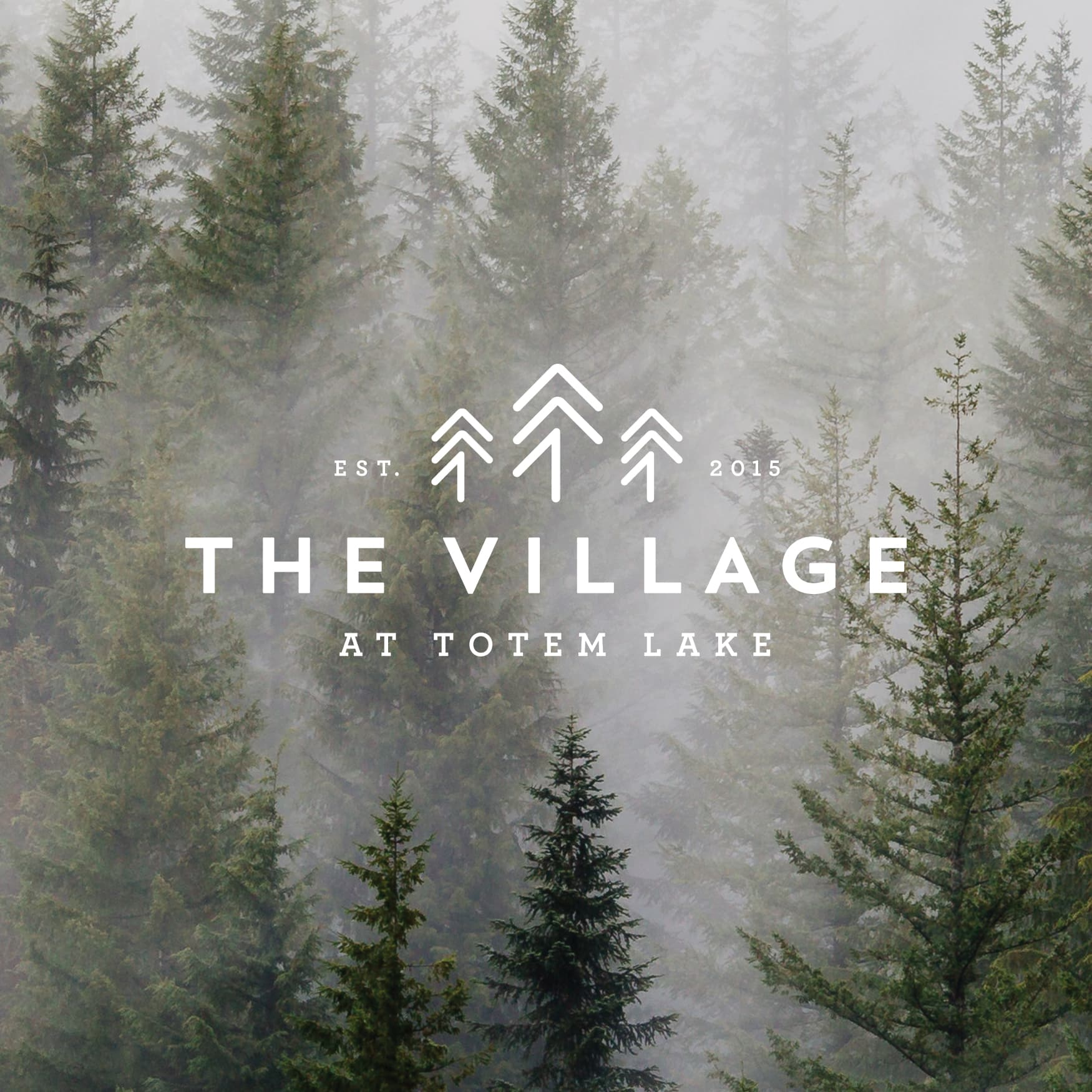 Tall green trees in a foggy mist in the background of logo design for THE VILLAGE