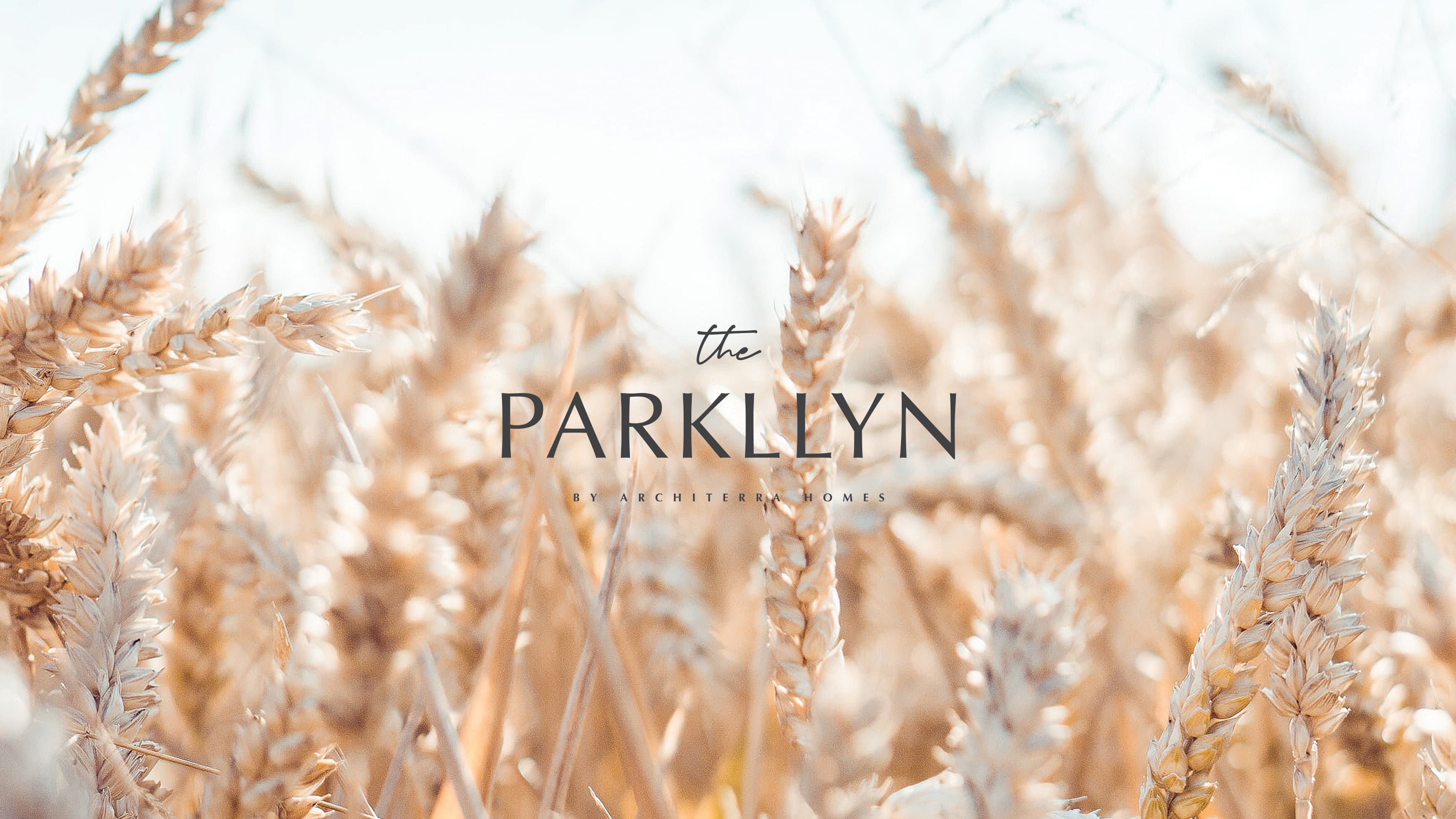 Image of a golden field of wheat and the logo design for The Parkllyn.