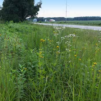 Quality of Life and Natural Environment goal: Image of a prairie restoration project