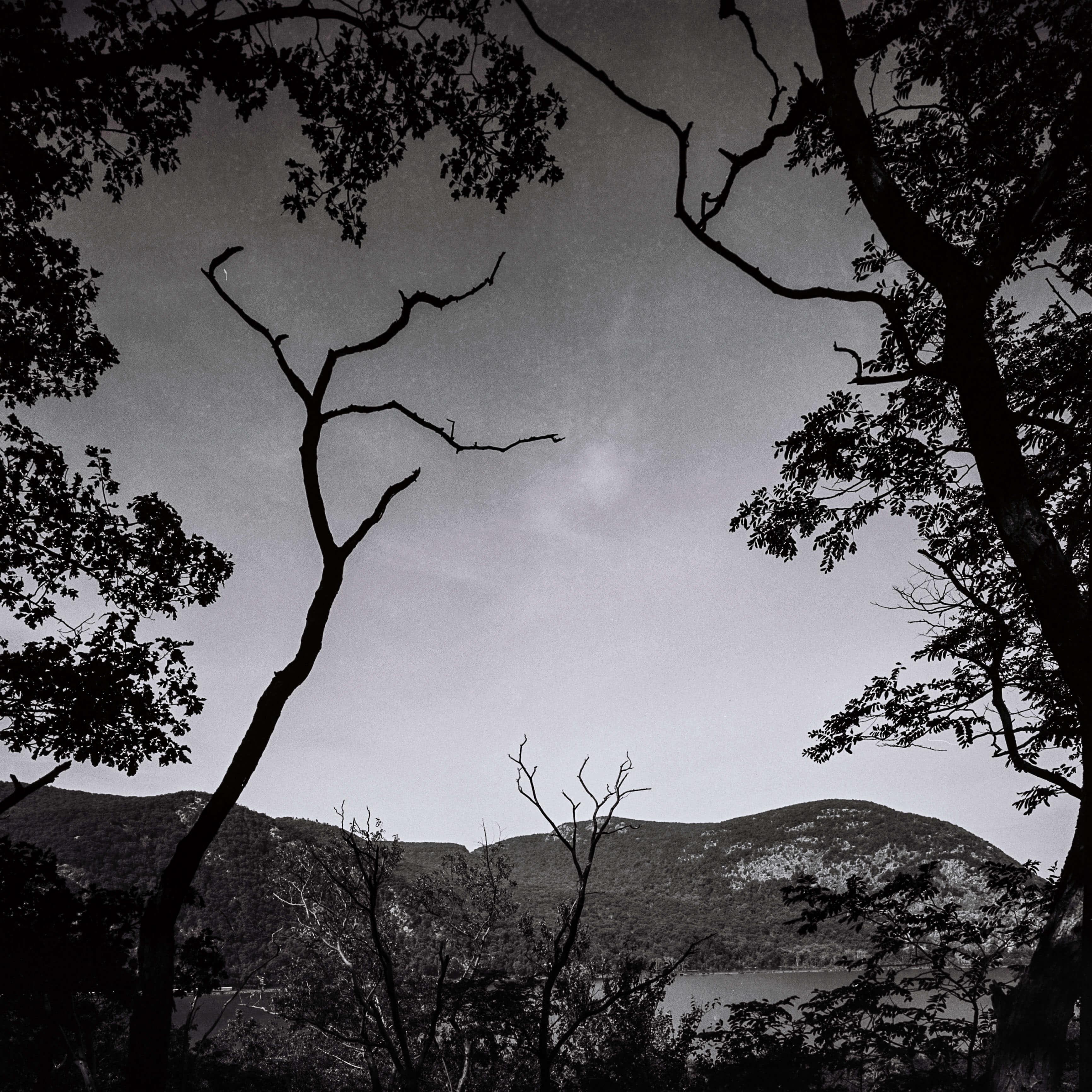 Gastelum 6x6 Film