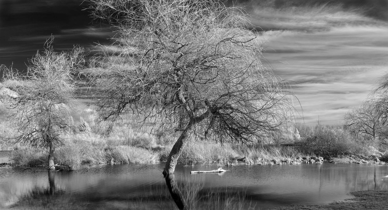 Kew Only Monochrome - Trout Lake Series