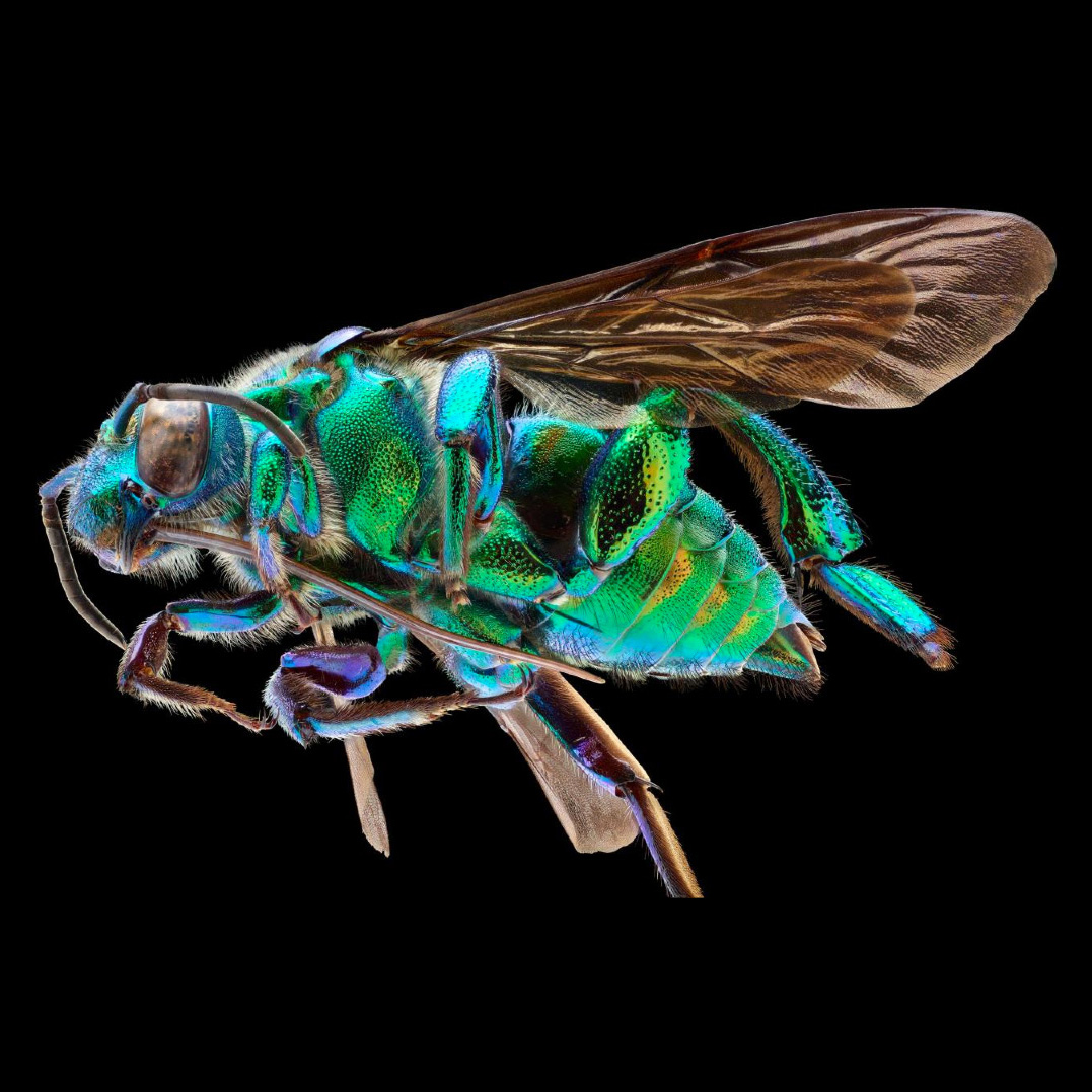 When Insects Become Huge: Macro Photography With ALPA