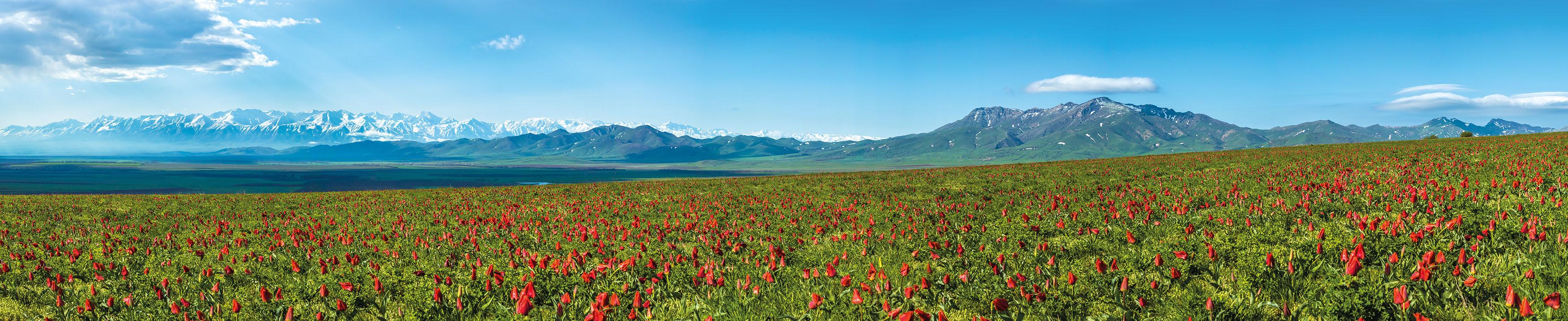 Kabdykairov Landscape
