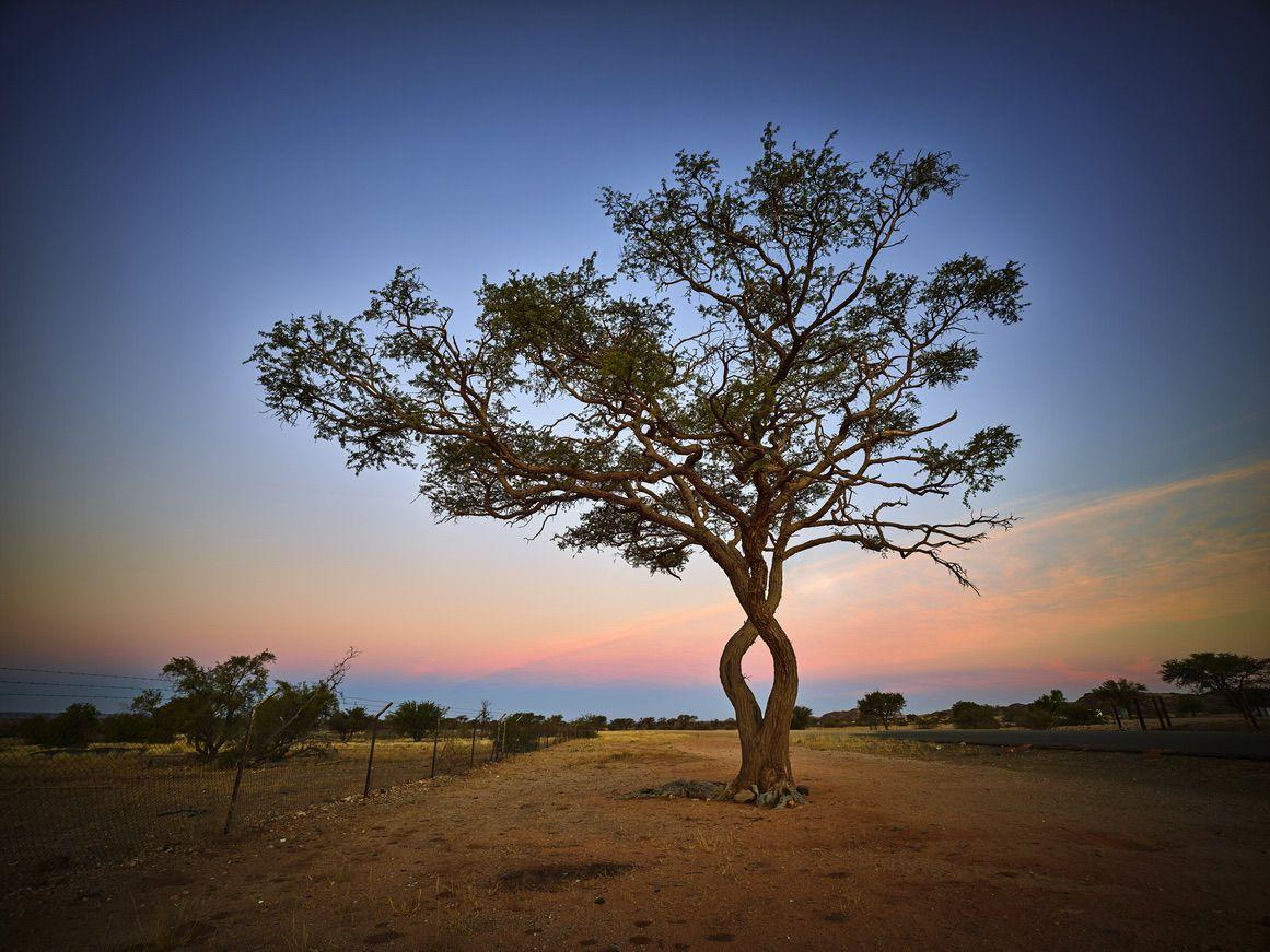 Tsang Namibia