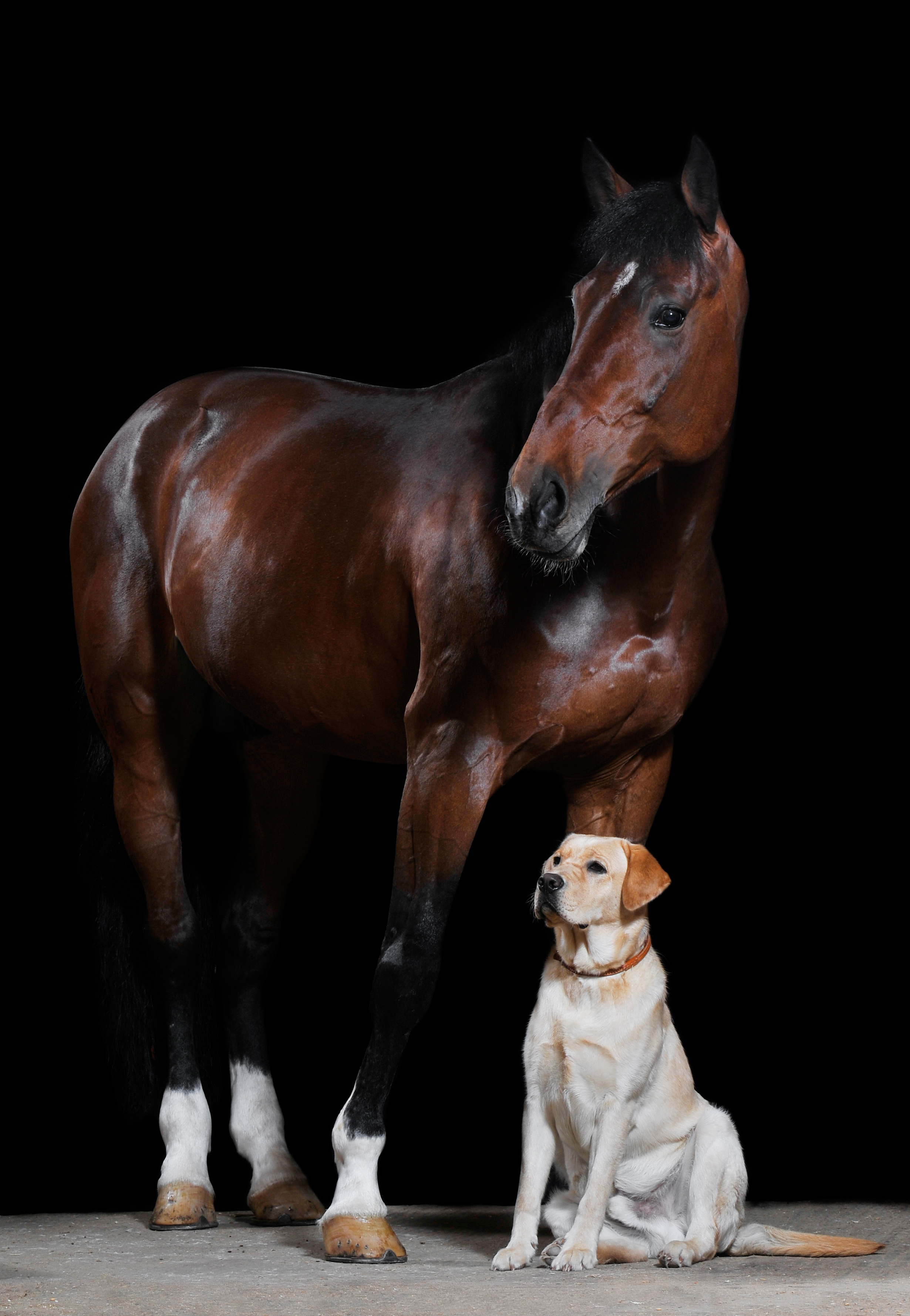 London College of Animal Osteopathy's programs are geared towards veterinarians, osteopaths, physiotherapists, dog trainers and other animal professionals seeking top quality training at a leading institute for canine and equine osteopathy.