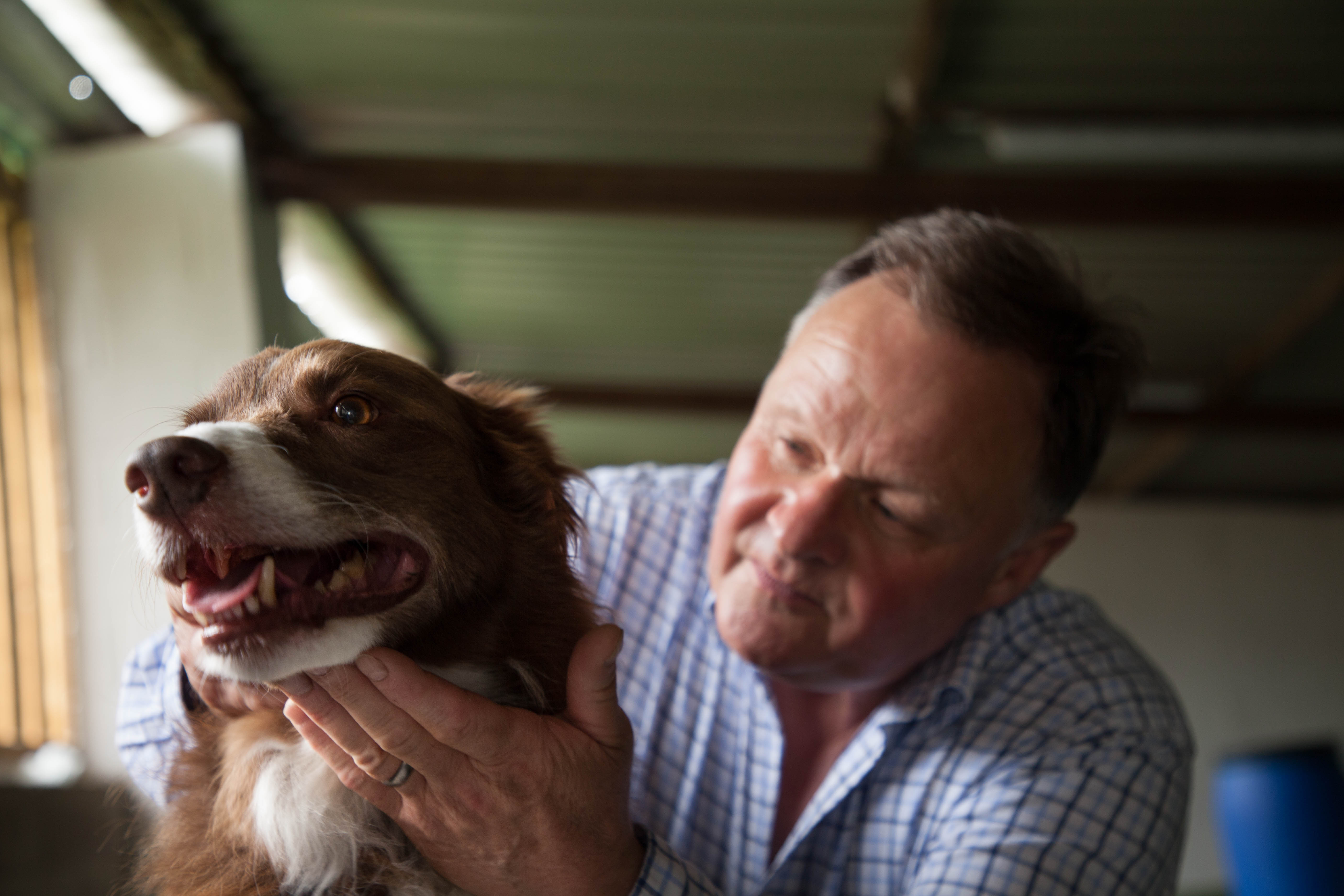 The Diploma in Animal Osteopathy (Canine Stream) is taught by Prof. Stuart McGregor, one of the word's foremost animal osteopaths.