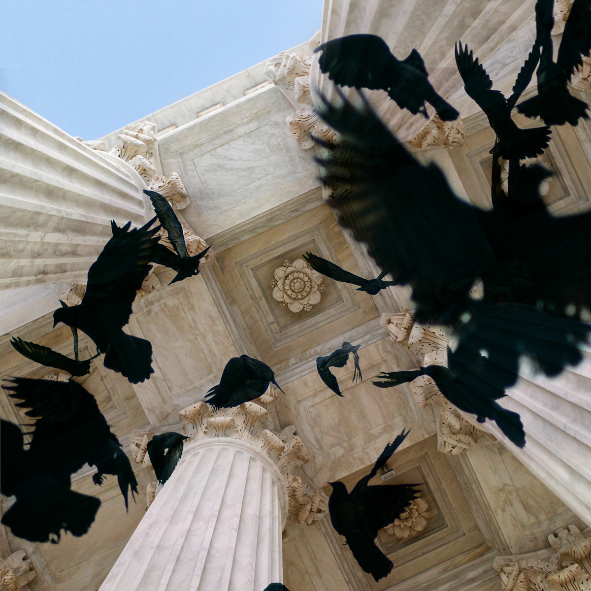 Birds, columns, Supreme Court columns