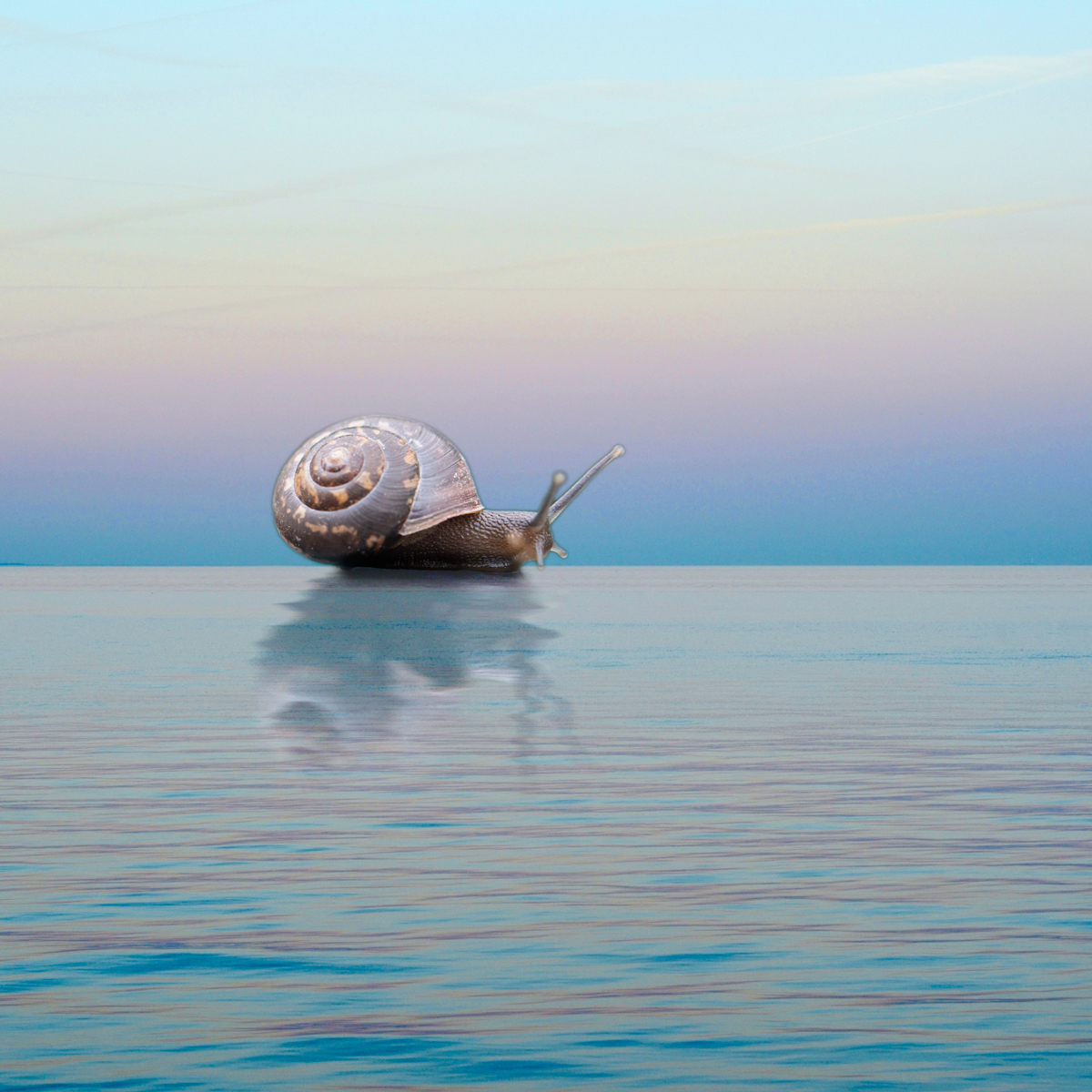 Snail crossing the ocean horizon