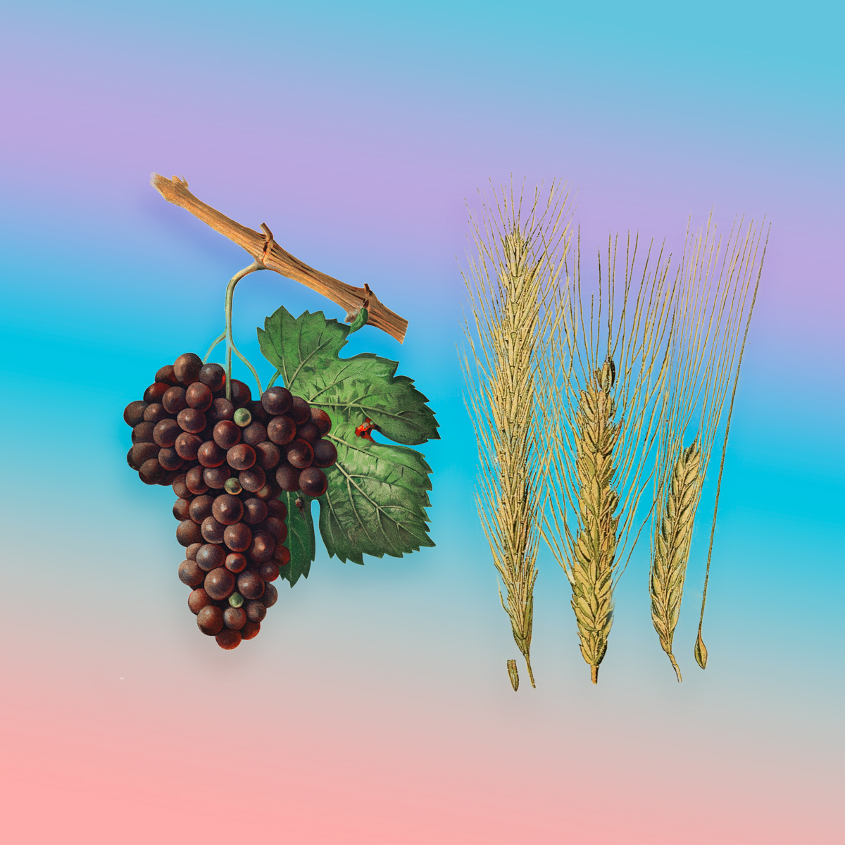Grapes and Wheat with pastel gradient