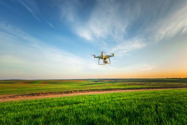drone quad copter over a yellow corn field