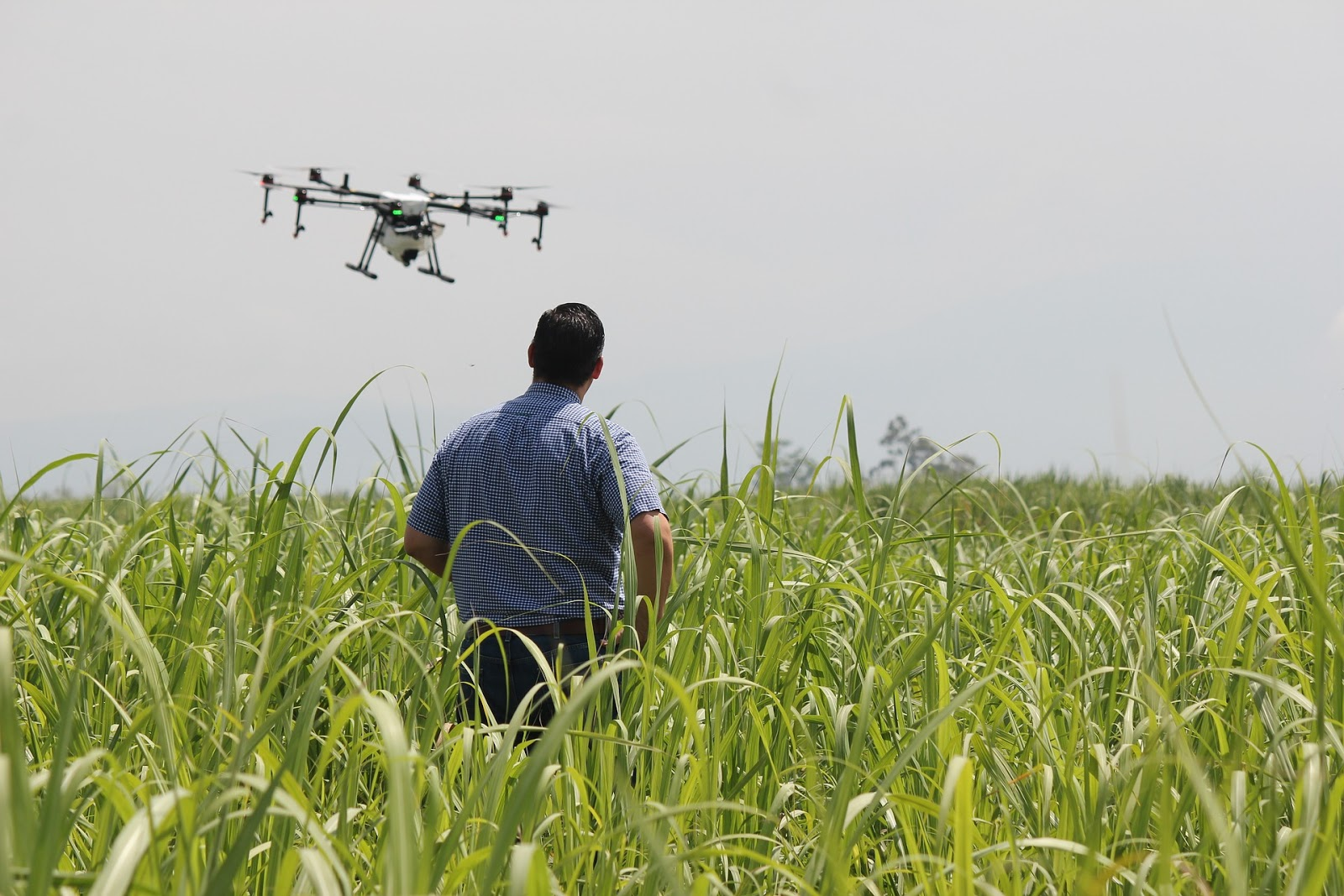 farmer looking at an aerial drone on a crop field