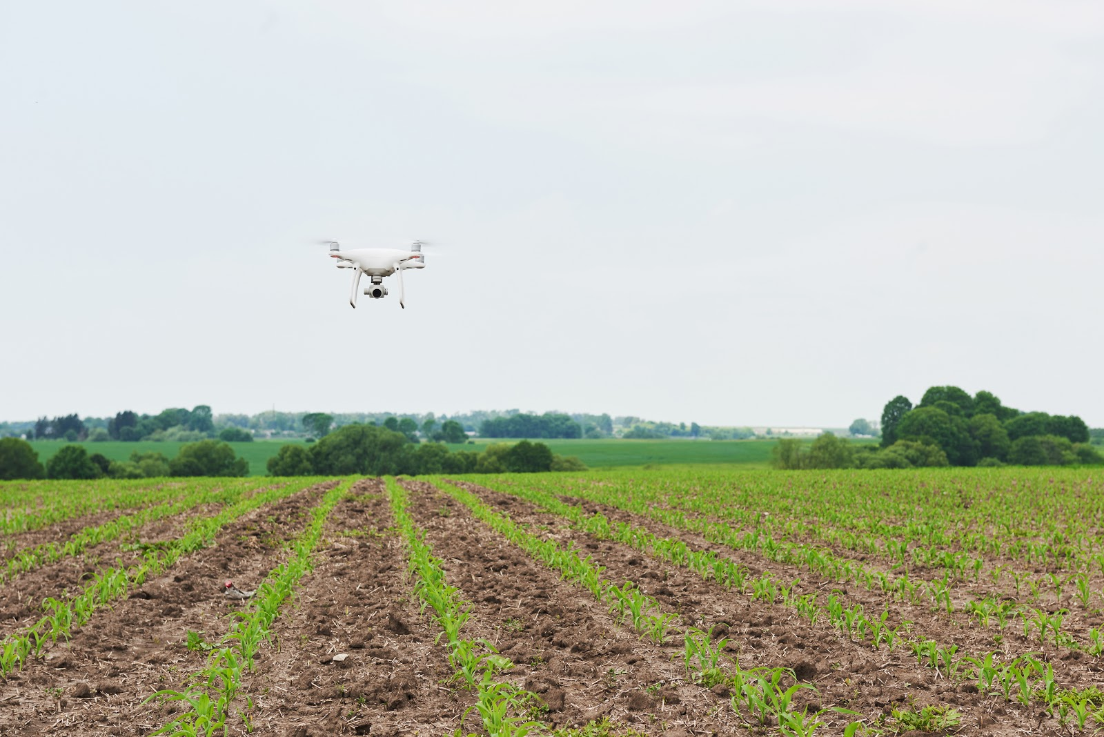 aerial drone flying over a crop field