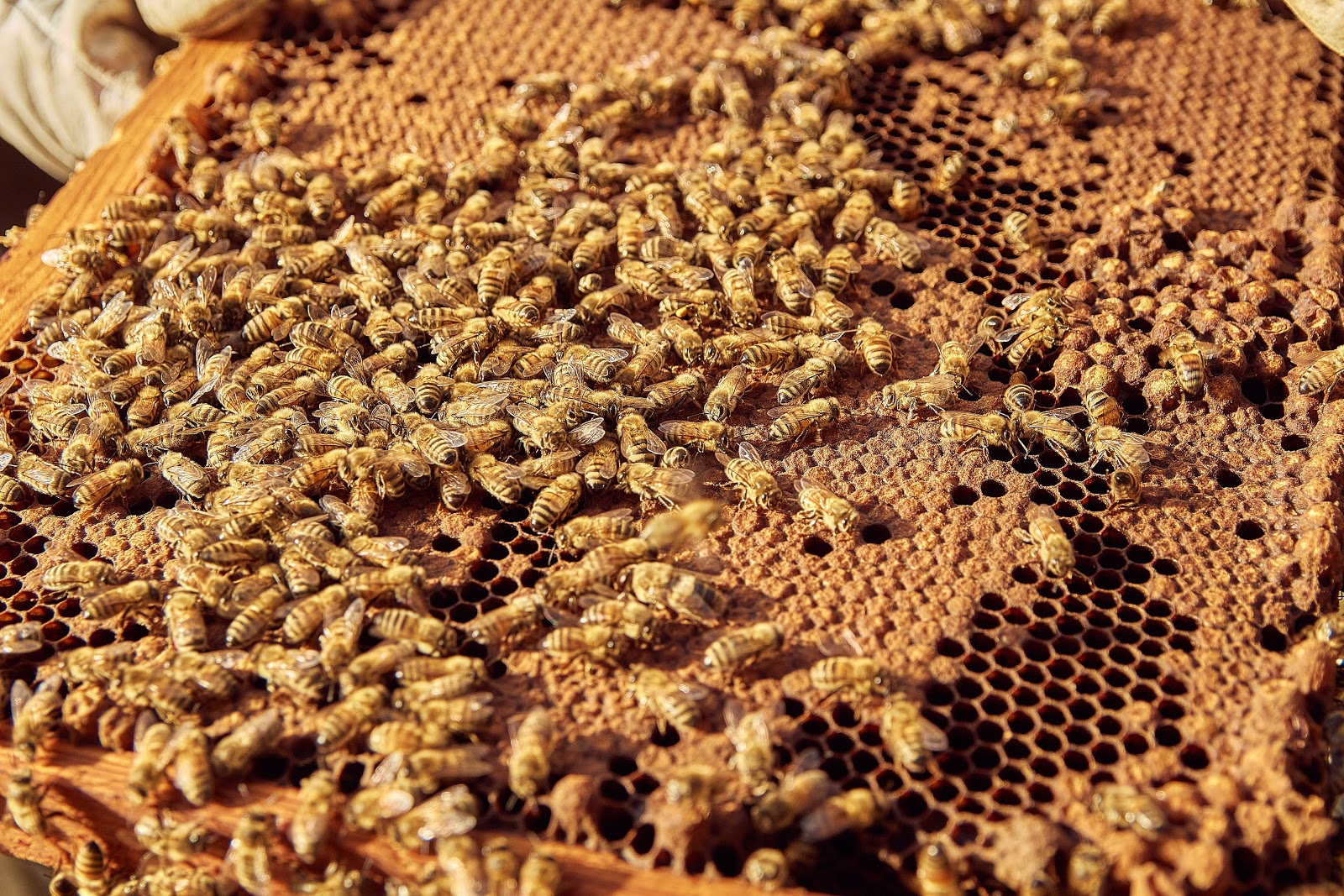 bees on a tray