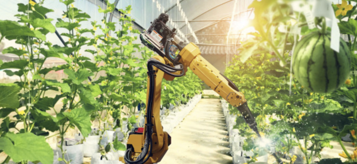 robotic agritech equipment operating on produce