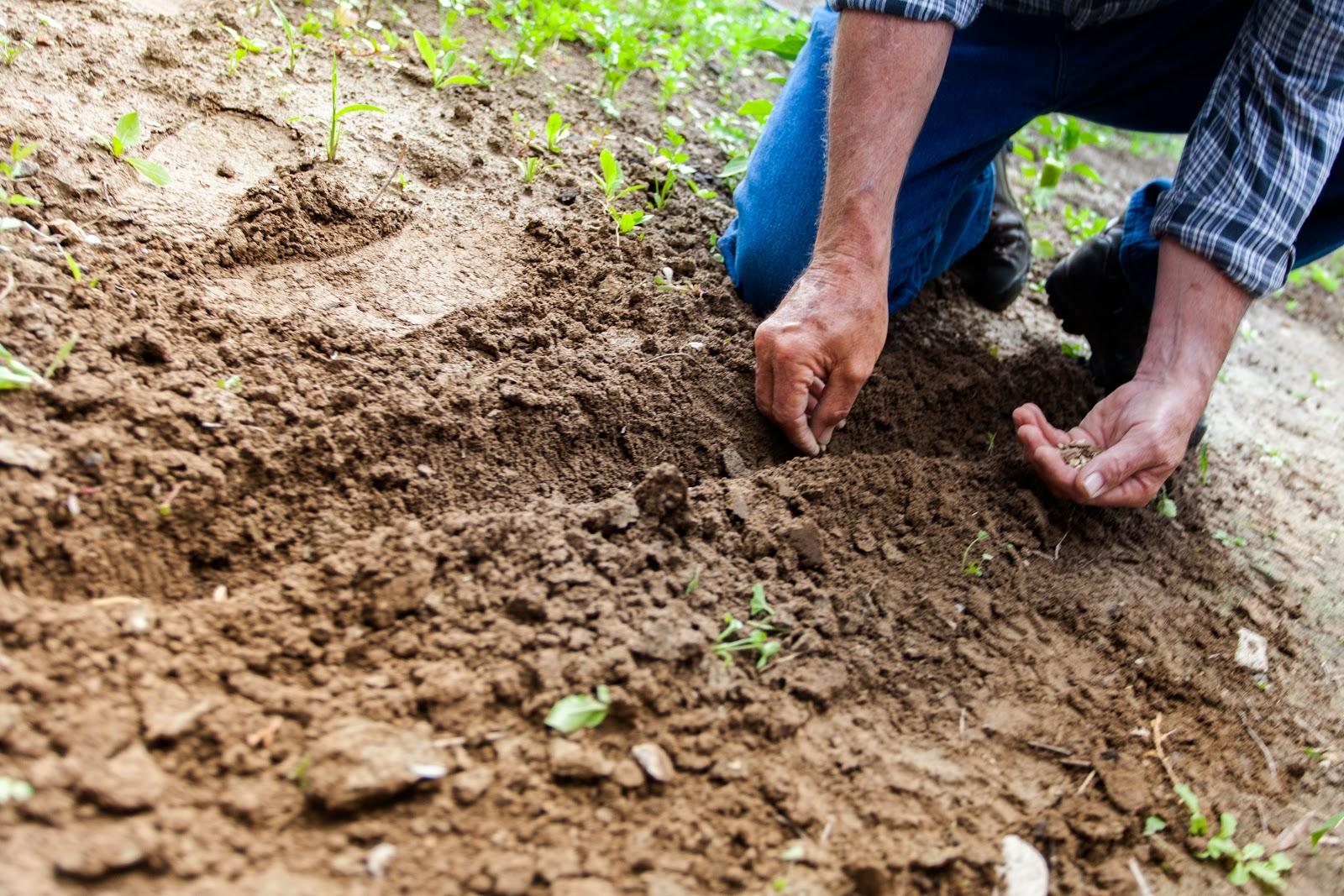 farmer planting crops on soil