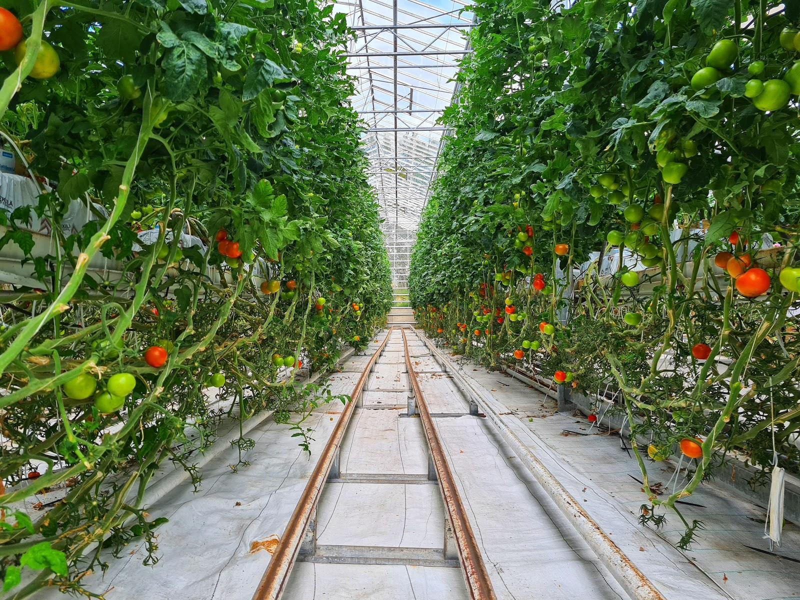 produce grown inside an indoor farm