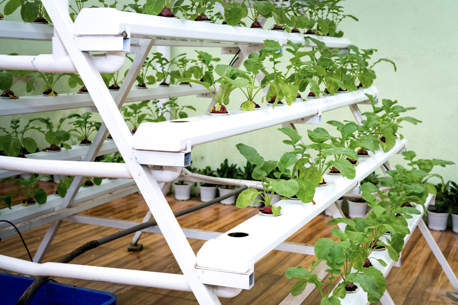 plants being grown in a novel farming system