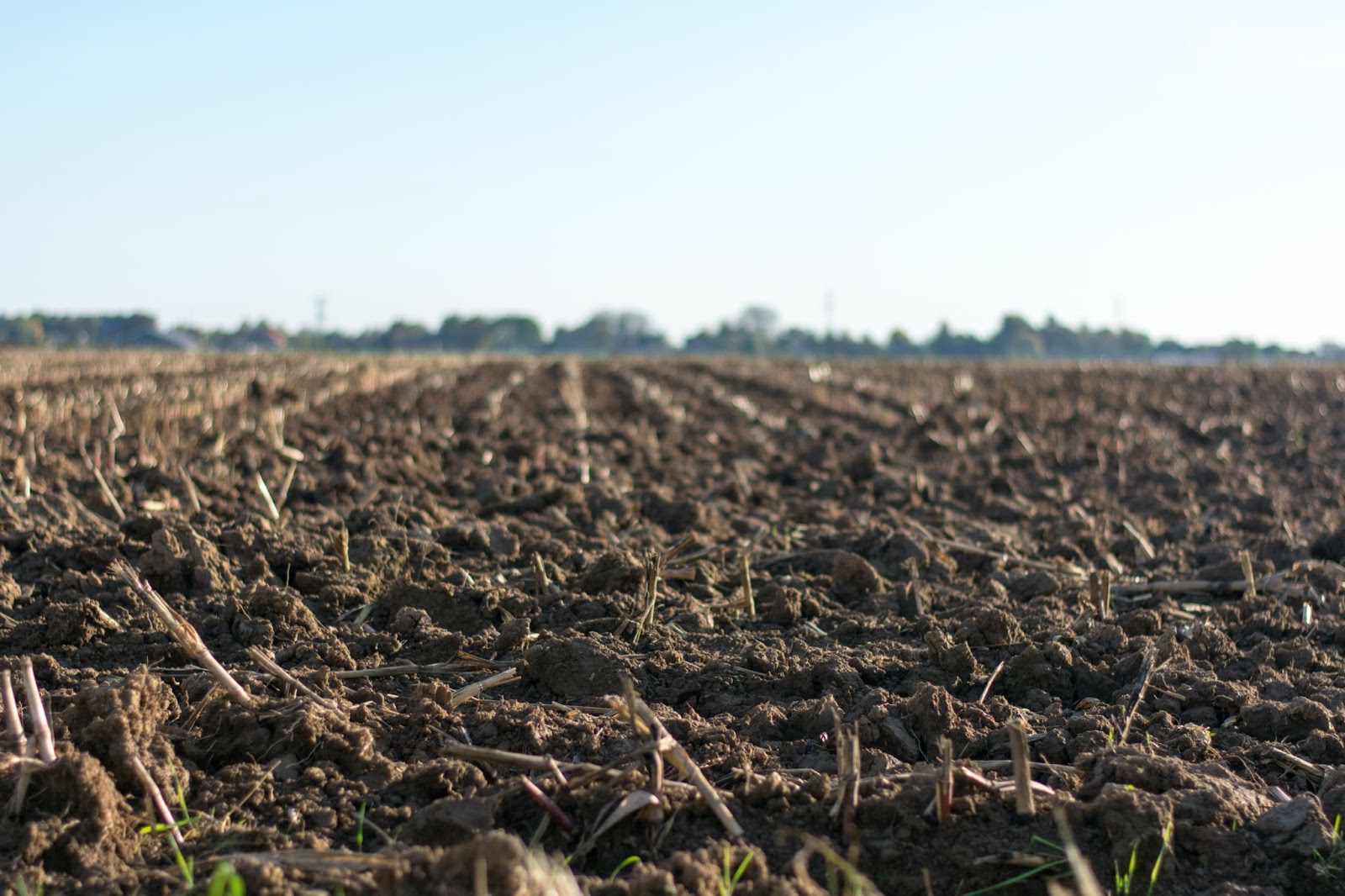 a field of soil without any produce
